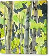 Glittering Poplars Canvas Print