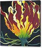 Gloriosa Lily Canvas Print