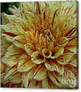 Glorious Gloriosa  Canvas Print