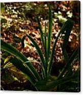 Glowing Iris Plant 3 Canvas Print