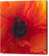 Glowing Poppy Canvas Print