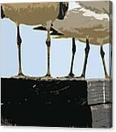 Glucosamine Candidates Canvas Print