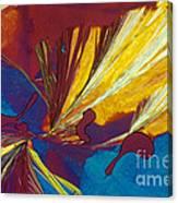 Glycine Canvas Print