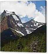 Going To The Sun Mountain Glacier National Park Spring Tree Larry Darnell Canvas Print