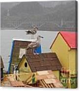 Gold Beach Gulls Canvas Print
