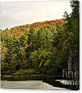 Gold Trimmed Trees Canvas Print