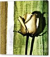 Gold Tulip Canvas Print