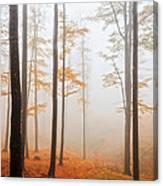 Golden Autumn Forest Canvas Print