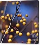 Golden Berries Canvas Print
