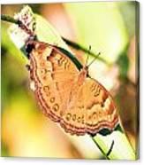 Golden Butterfly Canvas Print