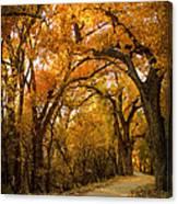 Golden Canopy Canvas Print
