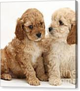 Golden Cockerpoo Puppies Canvas Print