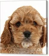 Golden Cockerpoo Puppy Canvas Print