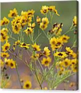 Golden Coreopsis Tickseed Wildflowers Canvas Print