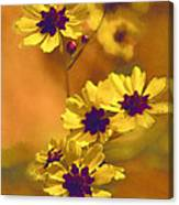 Golden Coreopsis Wildflowers  Canvas Print