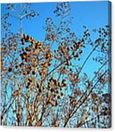 Golden Crepe Myrtle Seeds Canvas Print