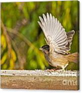 Golden Crowned Sparrow Canvas Print