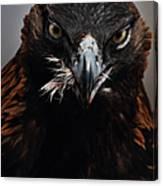 Golden Eagle Feeding Canvas Print