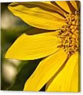 Golden Flower 1 Canvas Print