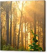 Golden Fog Thru The Trees Canvas Print