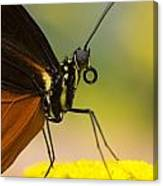 Golden Helicon On Flower Canvas Print