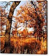 Golden Oaks Canvas Print