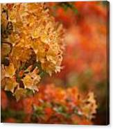 Golden Orange Radiance Canvas Print
