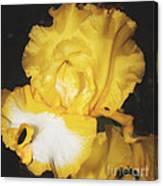 Golden Petals 2 Canvas Print