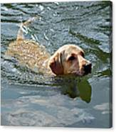 Golden Retriever Swimming Canvas Print