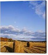 Golden Rolls Of Hay In A Field Canvas Print