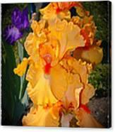 Golden Ruffles 2 Canvas Print