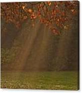 Golden Sunbeams Canvas Print