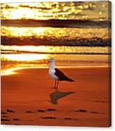 Golden Sunrise Seagull Canvas Print