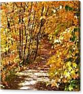 Golden Trail Canvas Print