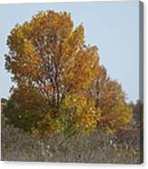 Golden Tree II Canvas Print