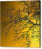 Golden Walnut Tree Canvas Print