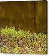 Golden Water's Edge Canvas Print