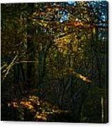 Golden Woodland Canvas Print