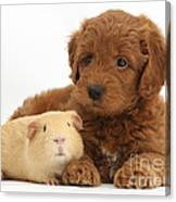 Goldendoodle Puppy And Guinea Pig Canvas Print