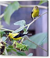 Goldfinch Pair Canvas Print