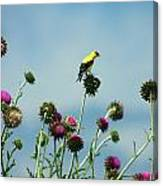 Goldfinches On Thistles Canvas Print