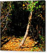 Golds Into The Natural Tunnel Canvas Print