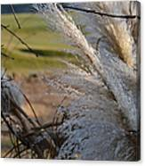 Golf Course Grasses Canvas Print