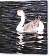 Goose And Lake Canvas Print