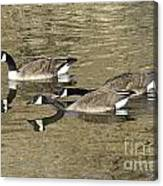 Goose Giving A Warning Canvas Print