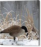 Goose In Snow Canvas Print