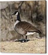 Goose Profile Canvas Print