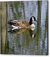 Goose Reflections Canvas Print