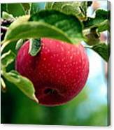 Gorgeous Red Apple Canvas Print