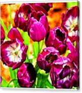 Gorgeous Tulips Canvas Print